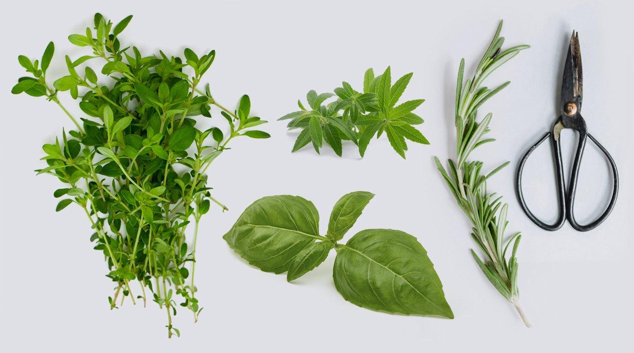 Contact, Le Clos des Herbes, producteur d'herbes aromatiques en Provence
