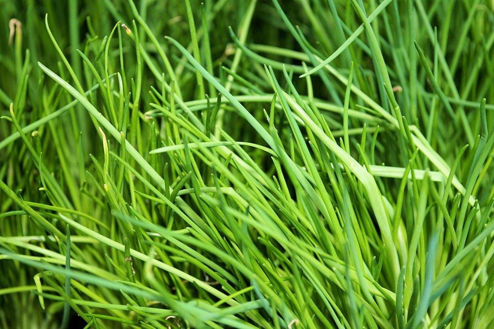 Le Clos des Herbes, producteur de basilic en Provence