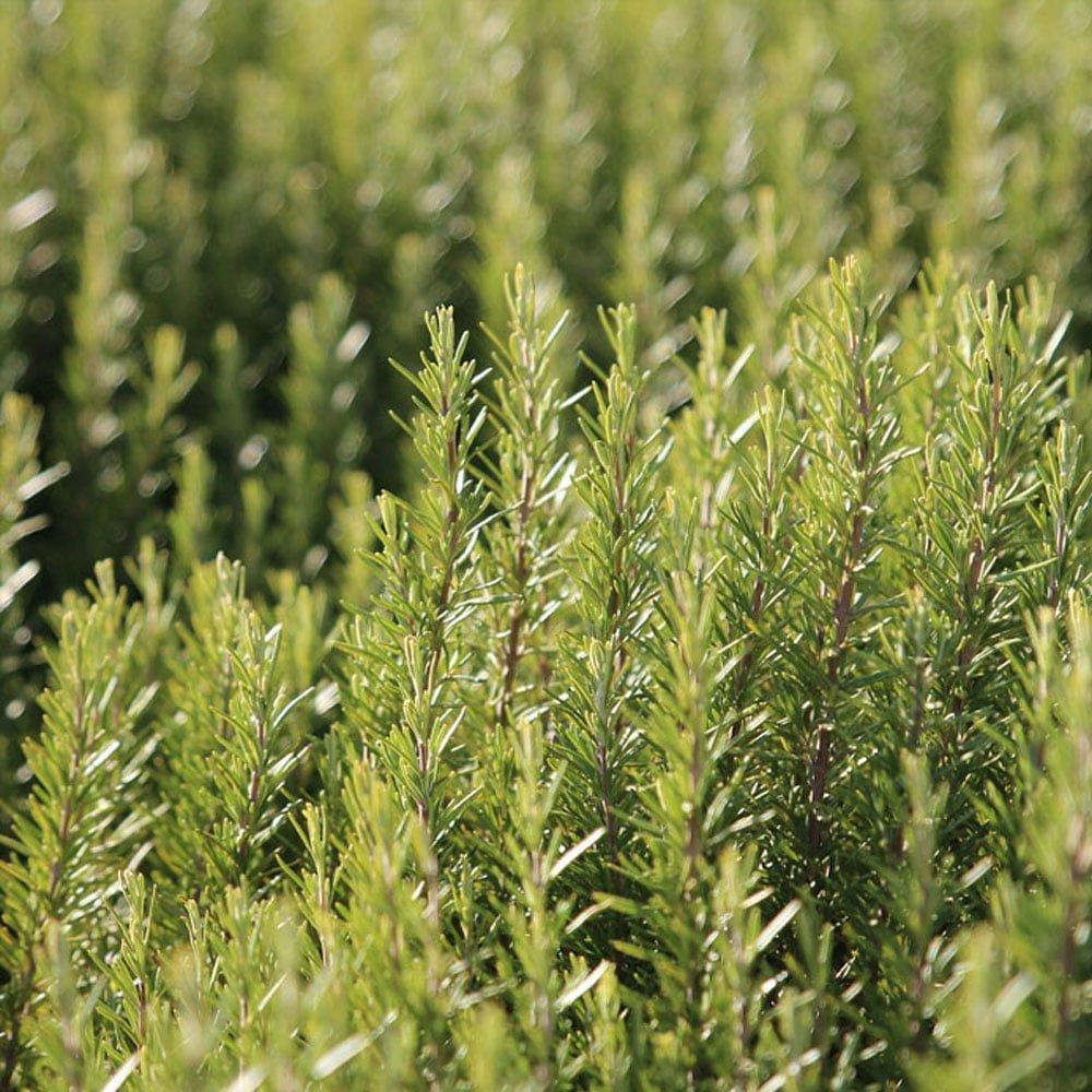 Le Clos des Herbes, producteur d'oseille en Provence
